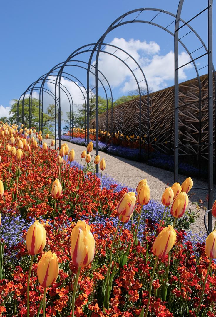 Studio Vonne | Somerset, The Newt, Flowers, Garden,
