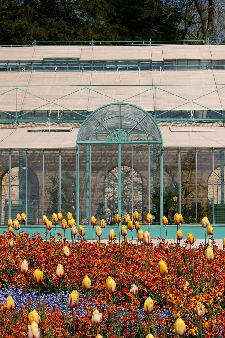 Studio Vonne | Greenhouse, tulips, flowers, garden design, visit, somerset, Studio Vonne