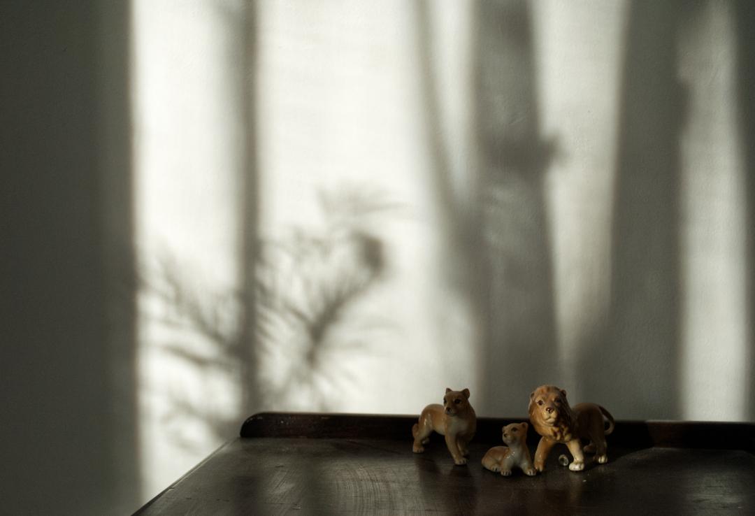 Biophilic design. shadows